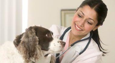 Asesoramiento veterinario.