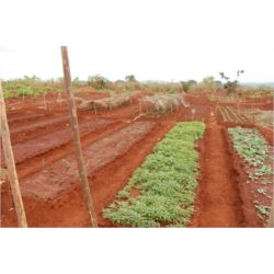Agricultura - Ganadería