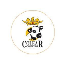 COLEAR CASTILLA Y LEON SCOOP