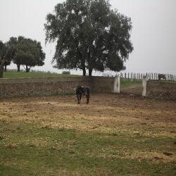 El campo Charro